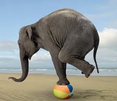Elephantbalancing
